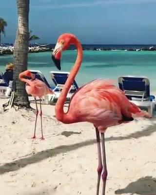 Flamingos Na Praia