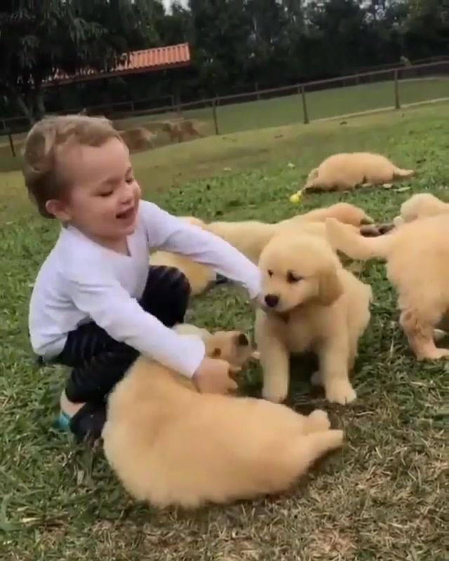 Garotinho Brincando Com Filhotes De Cachorros, Veja Que Lindas Imagens!!!