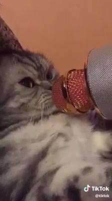 Gatinho Miando No Microfone, Olha Só Que Coisinha Mais Engraçada!!!