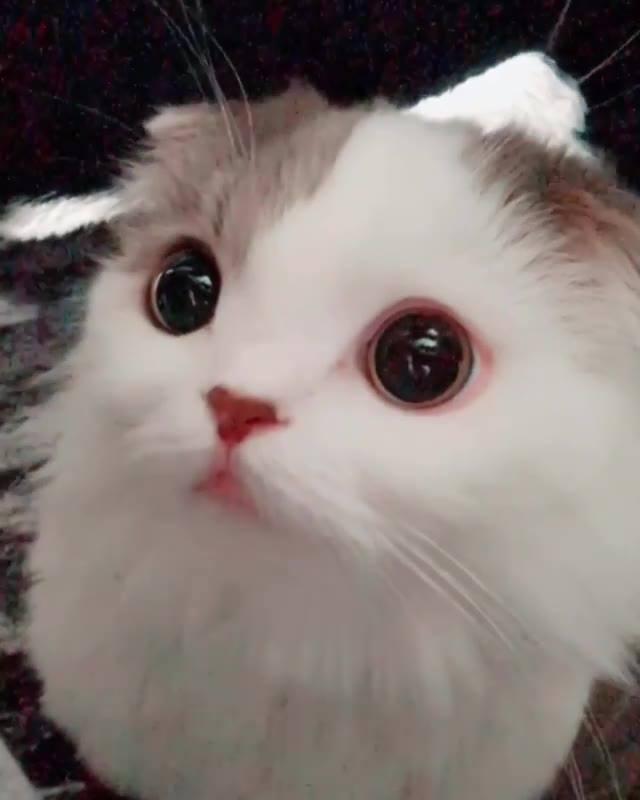 Gatinho Com Os Olhinhos Mais Meigos Que Você Vai Ver Hoje, Olha Só Que Fofo!!!