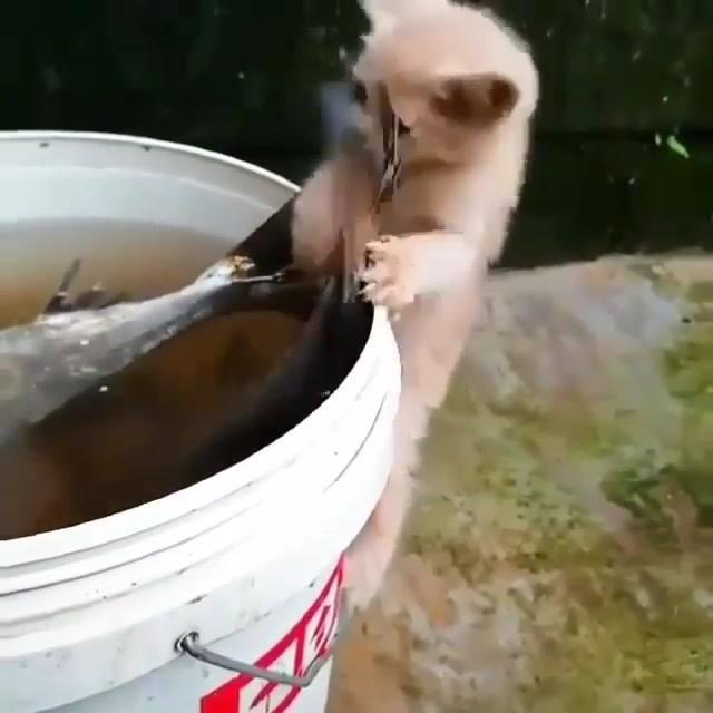 Gatinho Tentando Pegar Um Peixe Maior Que Ele, Hahaha! Vale A Pena Conferir!!!