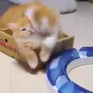 Gatinhos Amarelinhos Fazendo Fofuras, Mais Um Video De Gatos Adoráveis!