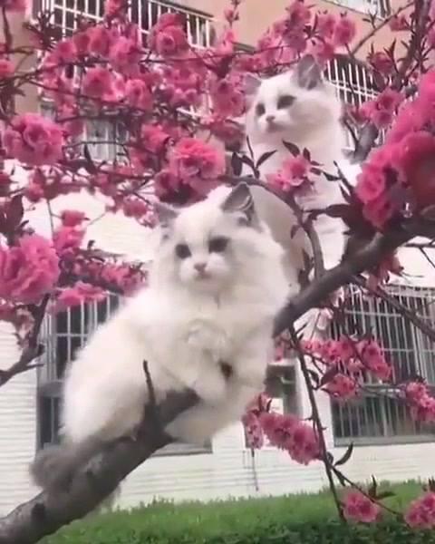 Gatinhos Brincando Em Uma Arvore Cheia De Flores, Veja Que Lindos!!!