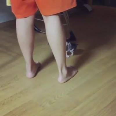 Gato Atacando Seu Dono