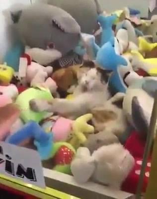 Gato Dormindo Em Lugar Inusitado, Por Essa Ninguém Esperava Hahaha!