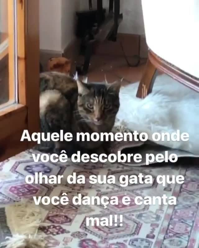 Gato Faz Mulher Perceber Que Canta Muito Mal, Confira O Video!