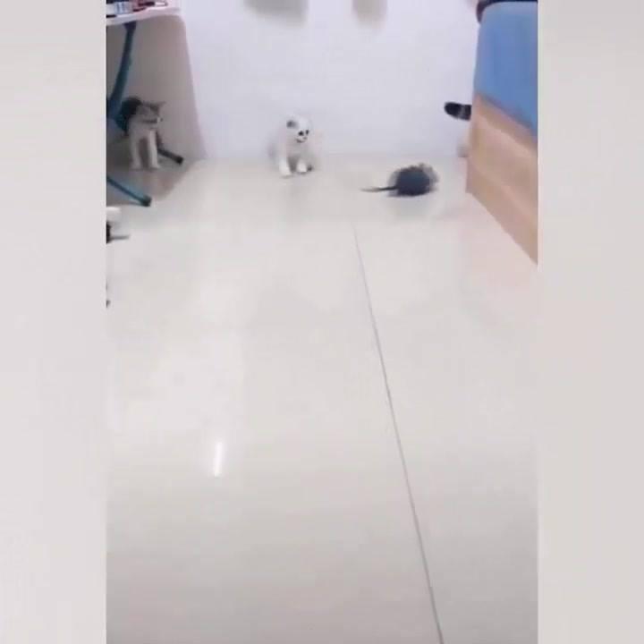 Os Gatos São Os Animais Mais Interessantes Do Mundo, Confira!