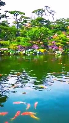 Lago Com Peixes Coloridos