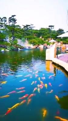 Lago Com Peixes Coloridos Lindo, A Natureza É Maravilhosa!!!