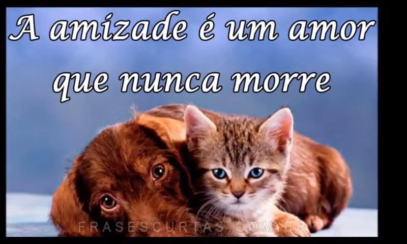 Mensagem  De Amizade Para Amigos Verdadeiros! Amizade É Um Amor Que Nunca Morre!