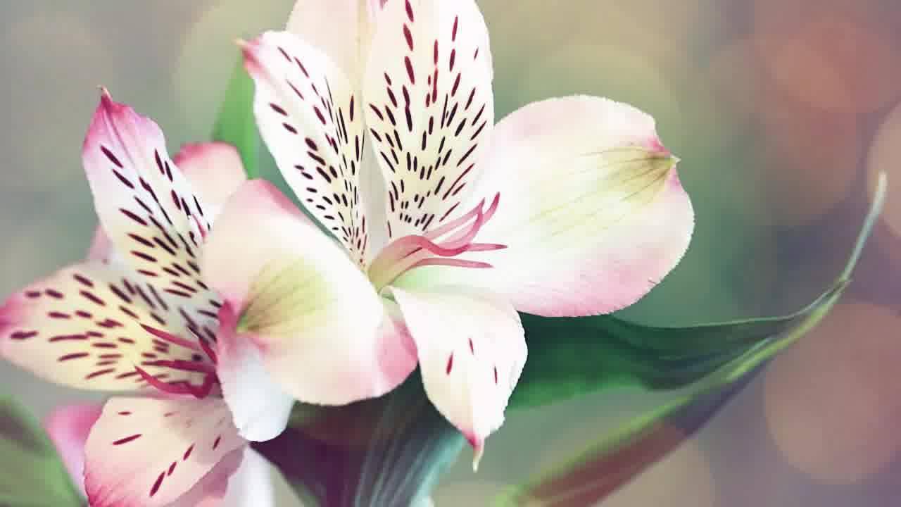 Mensagem De Feliz Aniversário Para Tia. Te Desejo Toda Felicidade Do Mundo!!!