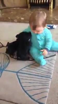 Momento Fofura Do Dia, Bebê Brincando Com Filhotinhos, Que Lindinhos!!!
