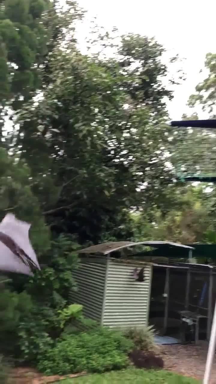 Morcego Gigante Voando Em Câmera Lenta, Veja Que Coisa Mais Linda!!!