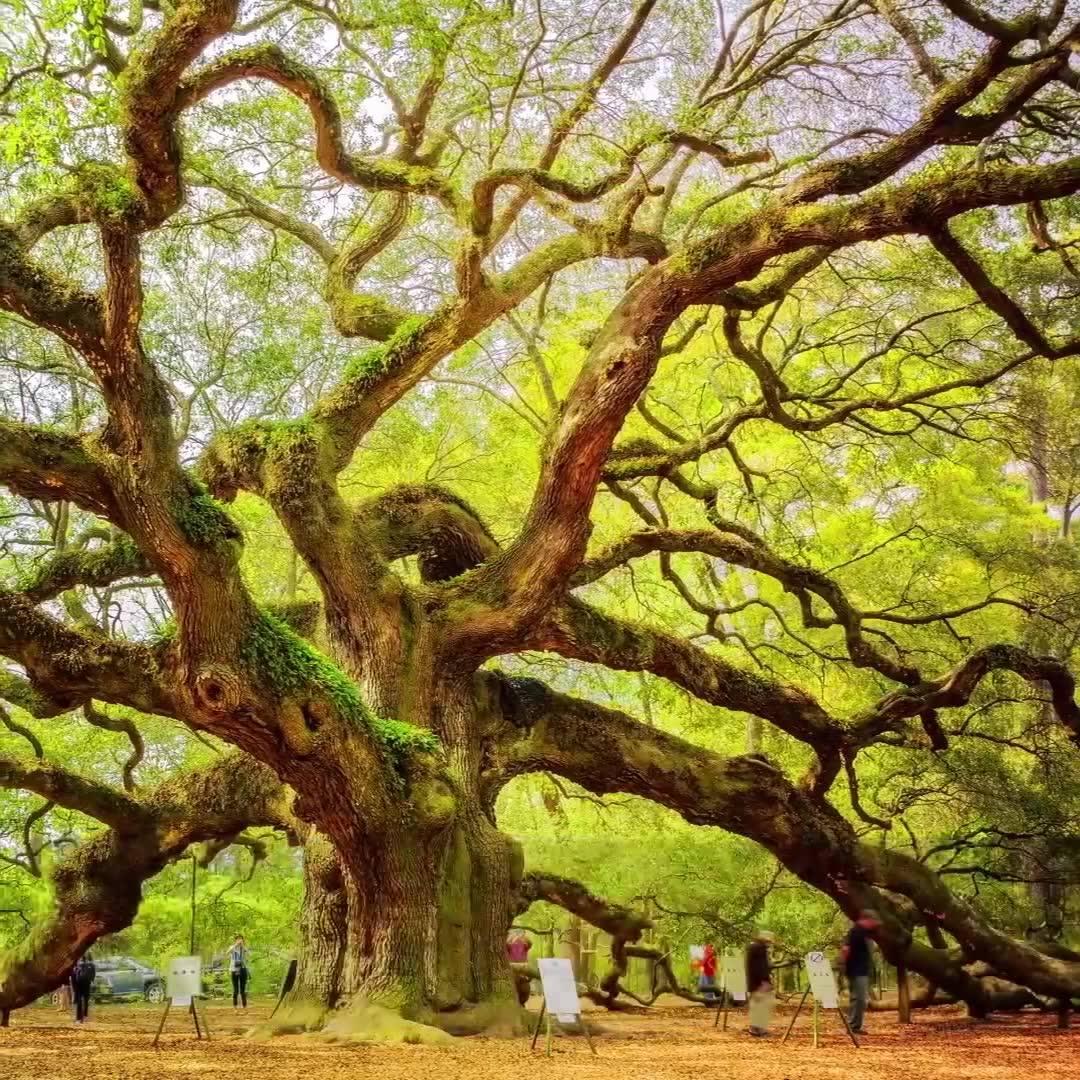 Veja Só Este Vídeo De Natureza Com As Mais Incríveis Arvores Do Mundo!!!