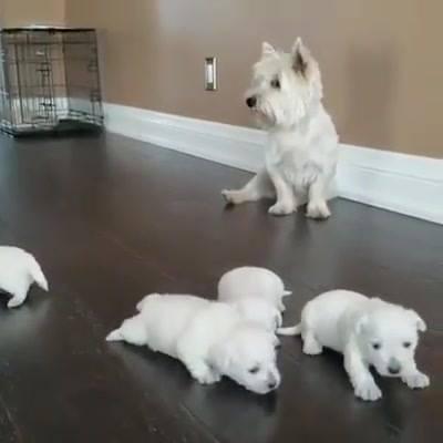 Observando Os Filhotinhos