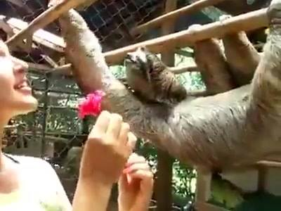 Oferecendo Uma Flor