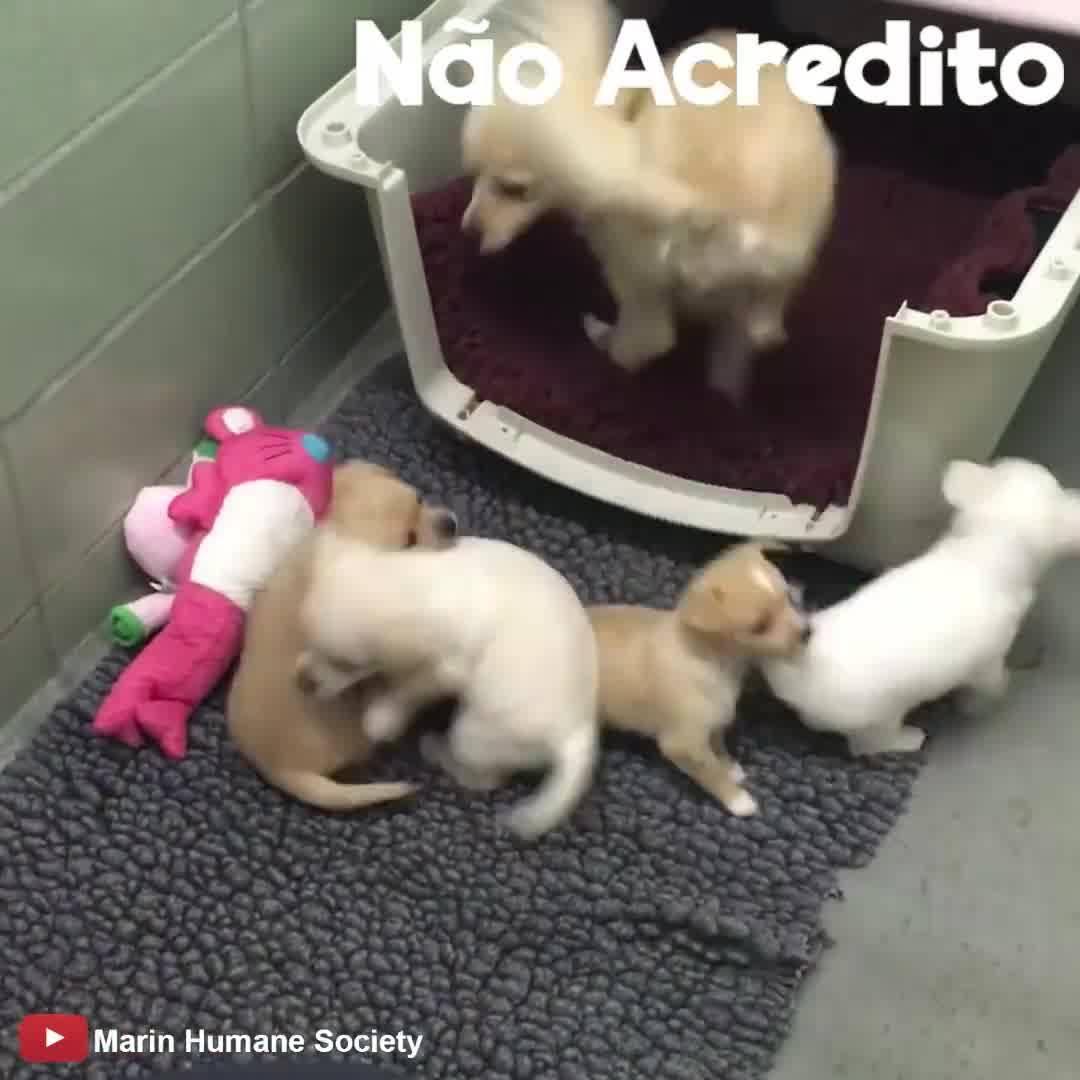Olha Só A Reação Desta Cadelinha Ao Ver Novamente Seus Filhotes!!!