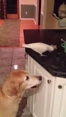 Periquito Dando Comida Para Seu Amiguinho Cãozinho, Olha Só Que Imagem Fofa!!!