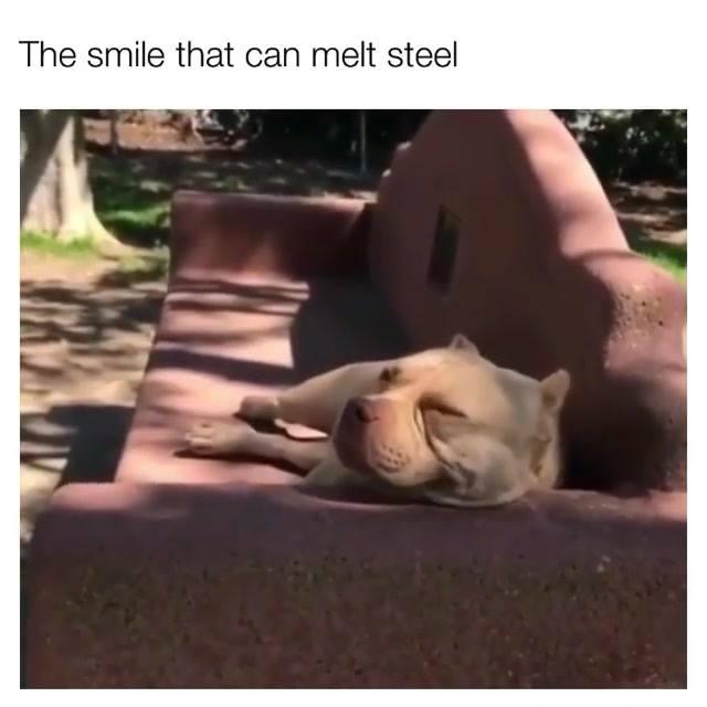 O Melhor Sorriso Do Dia É O Desse Cachorro, Confira Que Lindo!
