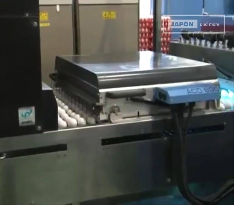Tecnologia Do Japão Em Empacotar Os Ovos, É Impressionante, Confira!!!