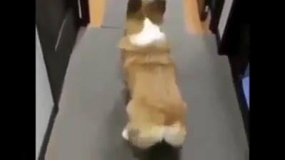 Tente Não Rir Com Este Vídeo Com Os Animais Mas Engraçados Que Você Vera Hoje!!!