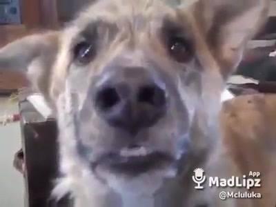 Video De Cachorro Com Dublagem, Ficou Muito Engraçado Isso Hahaha!