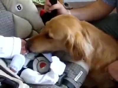 Vídeo Com Cachorro Recebendo O Bebê Pela Primeira Vez, Olha Que Lindo!!!
