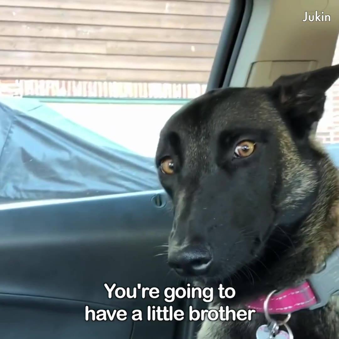 Video De Cachorros Super Engraçado, Você Vai Rir Do Começo Ao Final!