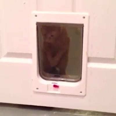 Video De Gatos, Eles E Suas Artes Engraçadas E Que Só Eles Sabem Fazer!