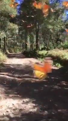 Vídeo Com Lindas Borboletas Voando, O Mundo Animal É Incrível!!!