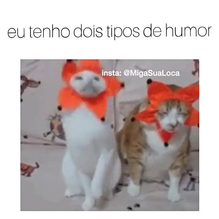 Os Vídeos De Animais São Demais! Veja S´[O Estas Fofuras De Gatinhos!!!