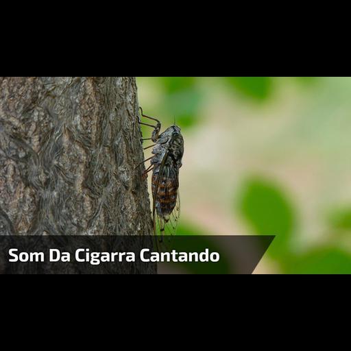 BAIXAR MERCEDES PARA SOSA MUSICAS