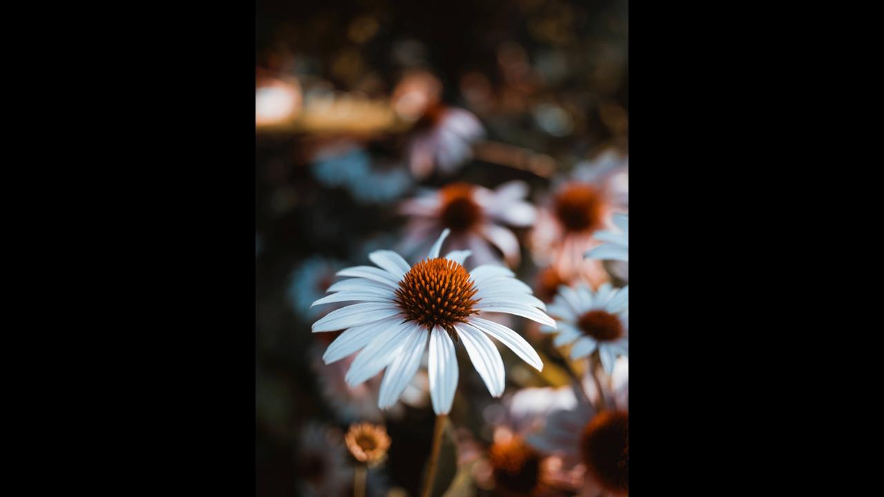 Que Seu Dia Tenha O Encanto E A Beleza De Um Lindo Dia De: Mensagem De Bom Dia Quarta-feira Com Imagens De Flores
