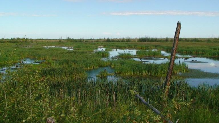 Горелое болото