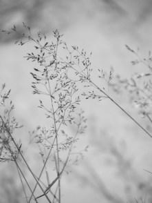 10. Grasses - Summer 2014