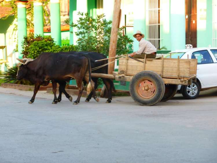 Vinales horse and cart