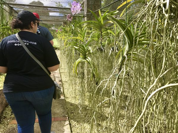 The exposed root systems from the orchid plants were so interesting. Personally, I have never been able to keep them alive.