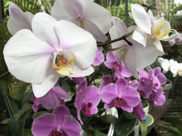 The flowers at Orchid World were just beautiful.