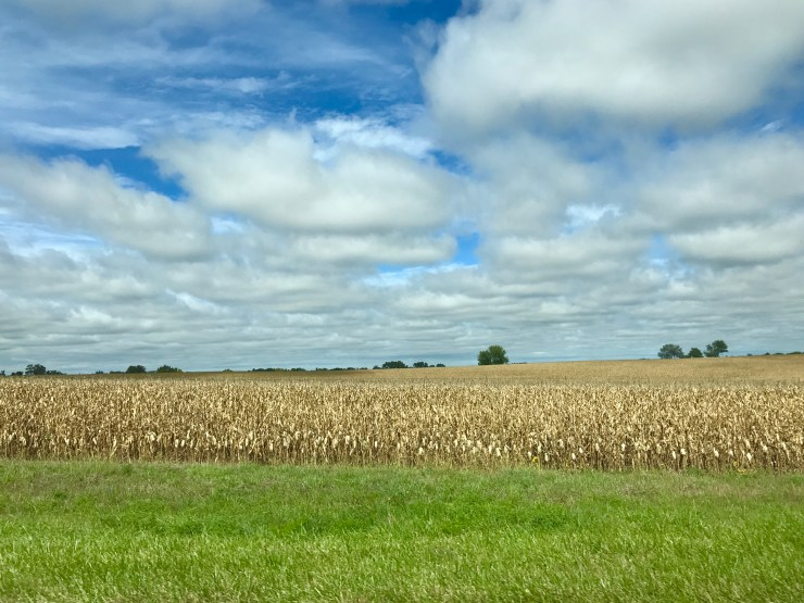 I love this time of year when the corn is just about ready to harvest.