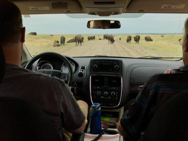 Fort Niobrara Wildlife Refuge bison, Valentine, Nebraska
