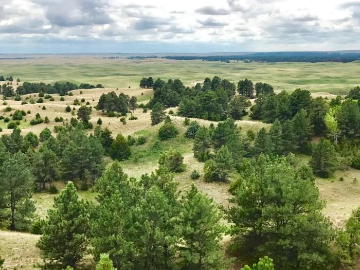 View from Scott Lookout Tower, Nebraska National Forest
