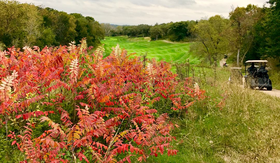 How we drove 18 holes at Quarry Oaks Golf Club and didn't lose a single ball