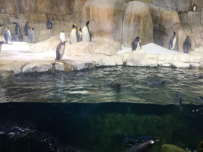 We have always been big fans of the penguin exhibit at the Henry Doorly Zoo in Omaha, Nebraska, but it was especially nice to be there when it wasn't overflowing with people.