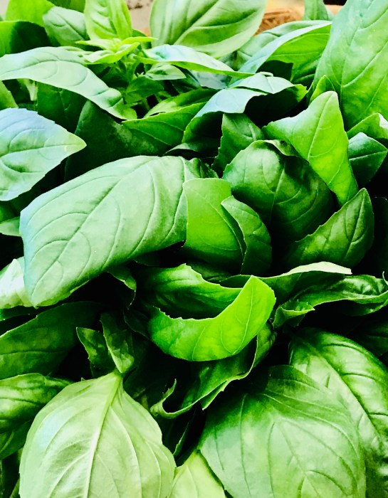 Basil in the farmers' market, Siena, Italy used in delicious Tuscan food