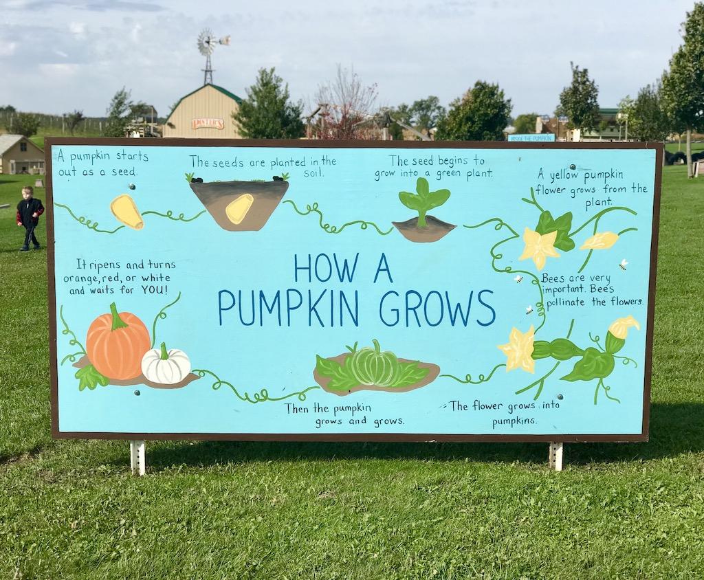 Education at Pinter's Gardens and Pumpkins, Decorah, Iowa