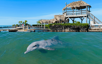 Seven tips for your visit to the Dolphin Research Center in Marathon, Florida