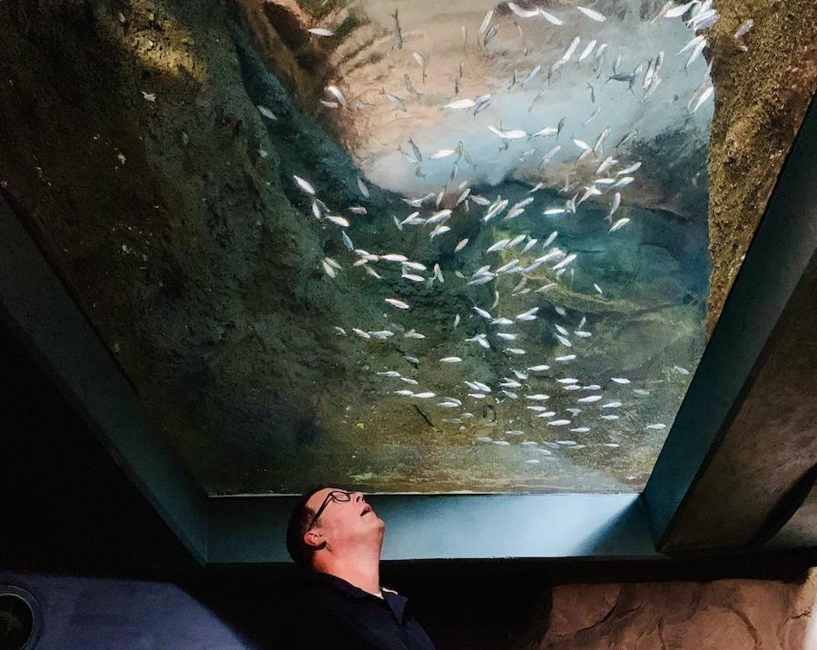 look up at Georgia aquarium
