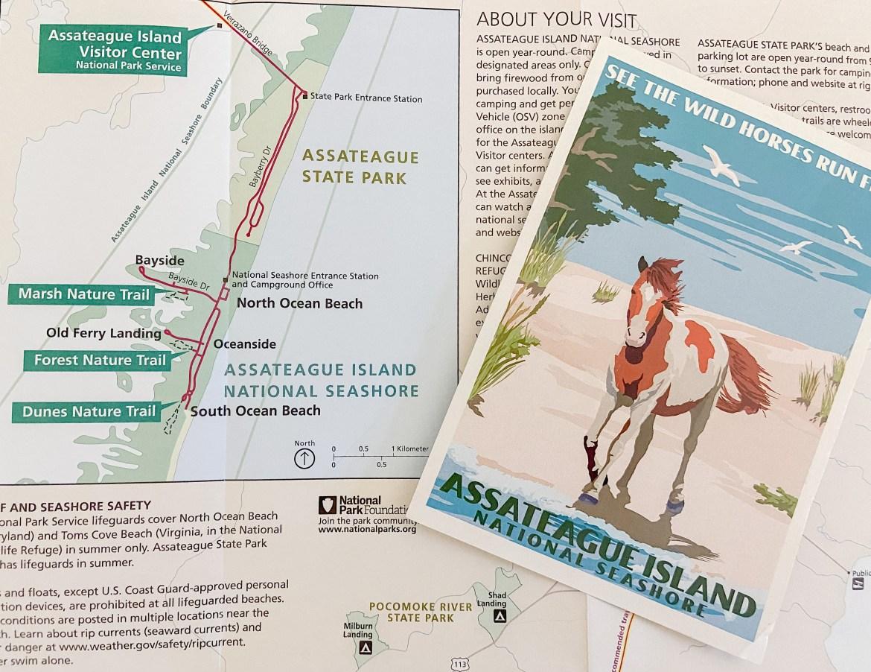 Visit the Wild Horses of Assateague Island
