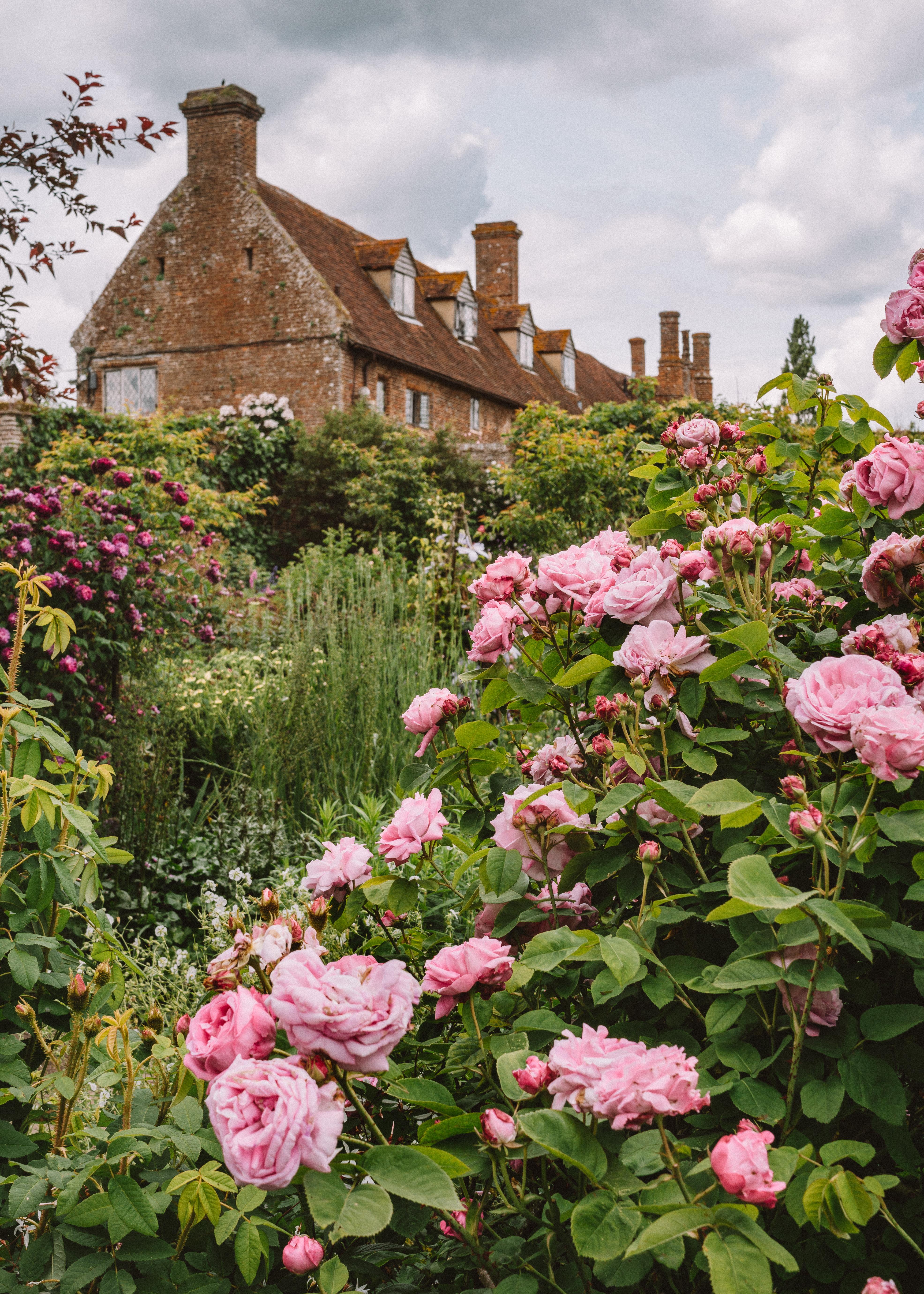 Roses at Sissinghurst Castle Gardens