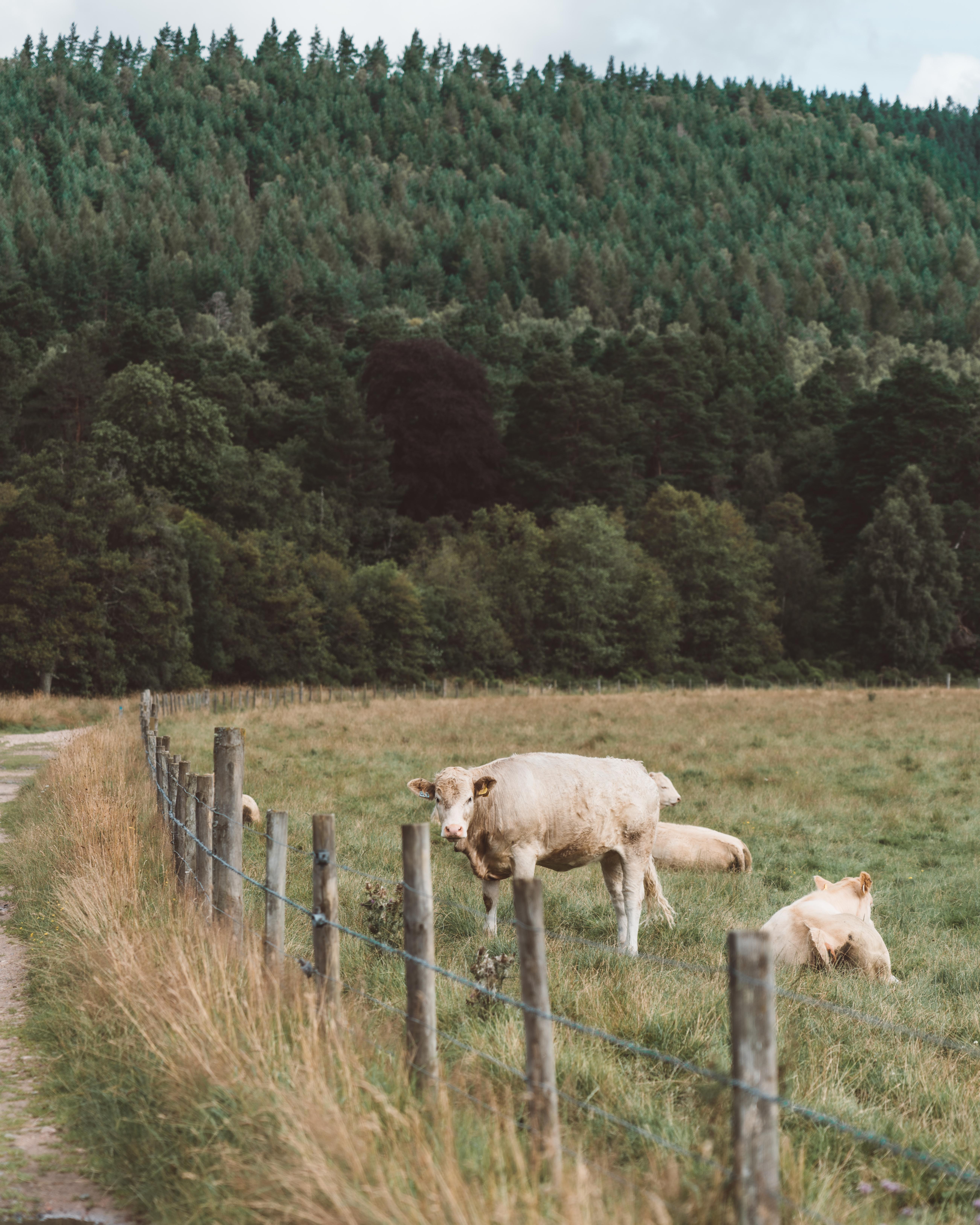 An Adventure in Aberdeenshire | Glen Tanar Estate